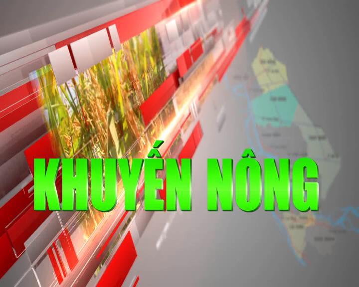 Khuyến nông - 24/11/2020: Ứng dụng hệ thống phun tưới cho vườn cây ăn trái