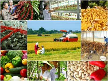 Tái cơ cấu nông nghiệp - 11/4/2021: Kinh tế tập thể - Điểm tựa cho nông dân