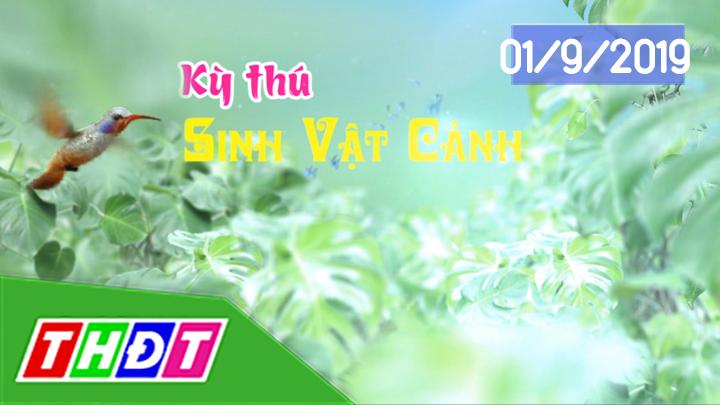 Kỳ thú sinh vật cảnh - 01/9/2019: Hồ thủy sinh - Cá Koi