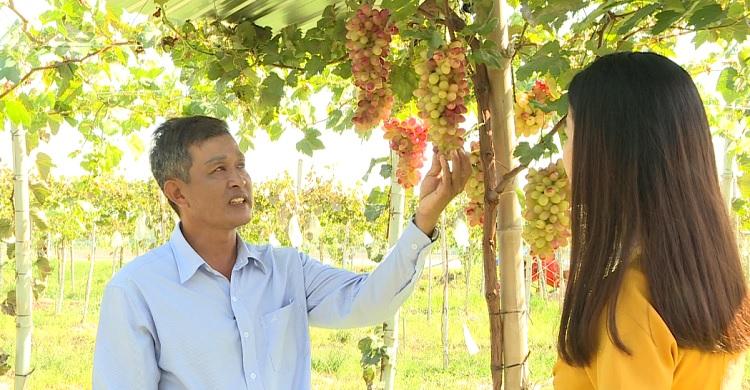 Khởi nghiệp - 19/02/2021: Anh Nguyễn Quốc Việt HTX DVNN Bình Hàng Trung