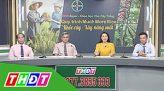 Tư vấn khuyến nông - 22/11/2019 - Quản lý sâu cuốn lá và đạo ôn vụ đông xuân
