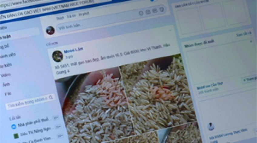 Nông dân bán lúa online
