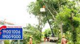 Điện và cuộc sống - 21/8/2021: Đảm bảo điện an toàn thông suốt trong mùa mưa bão