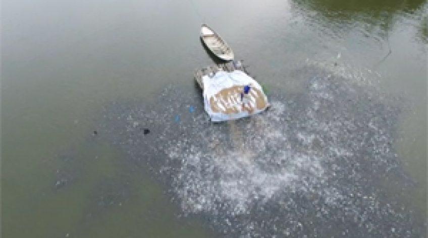 Chủ động ứng phó sụt giảm cá tra