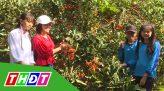 Tạp chí du lịch xanh - 10/11/2019: Du lịch thị xã Hồng Ngự