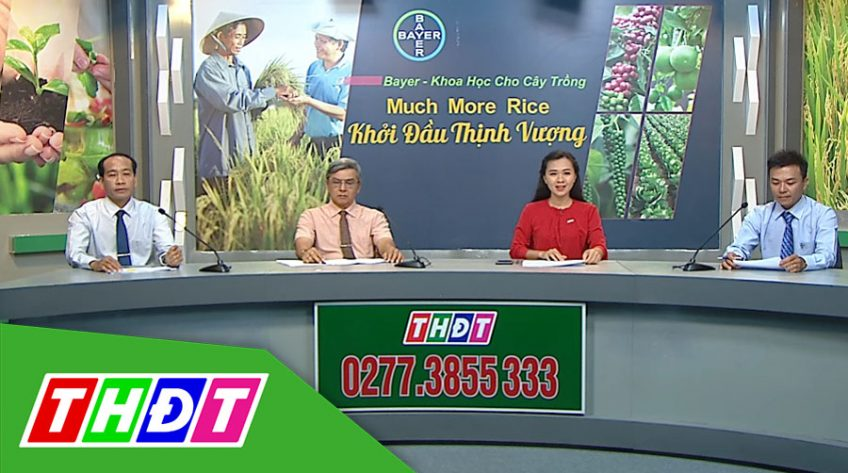 Tư vấn khuyến nông - 29/11/2019 - Much more rice Khởi đầu thịnh vượng