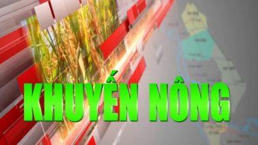 Khuyến nông - 16/7/2019: Tiết kiệm chi phí khi giá lúa thấp