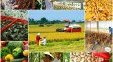 Tạp chí Tái cơ cấu nông nghiệp - 05/7/2020