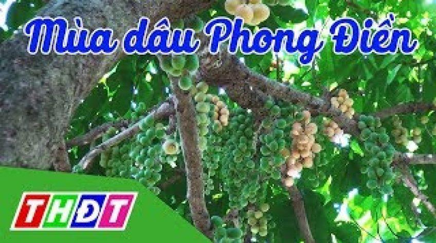 Đặc sản miền sông nước: Mùa dâu Phong Điền