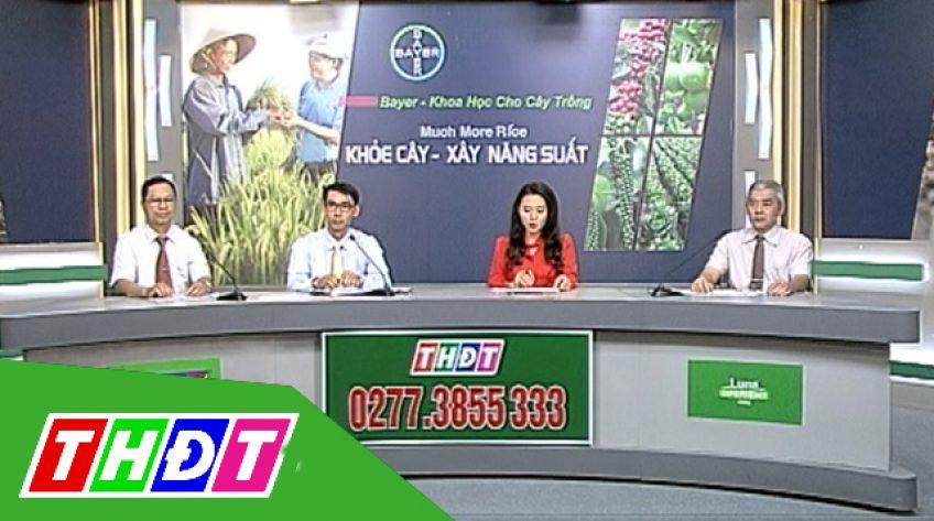 Tọa đàm Khuyến nông 22/12/2018: Khỏe cây, xây năng suất