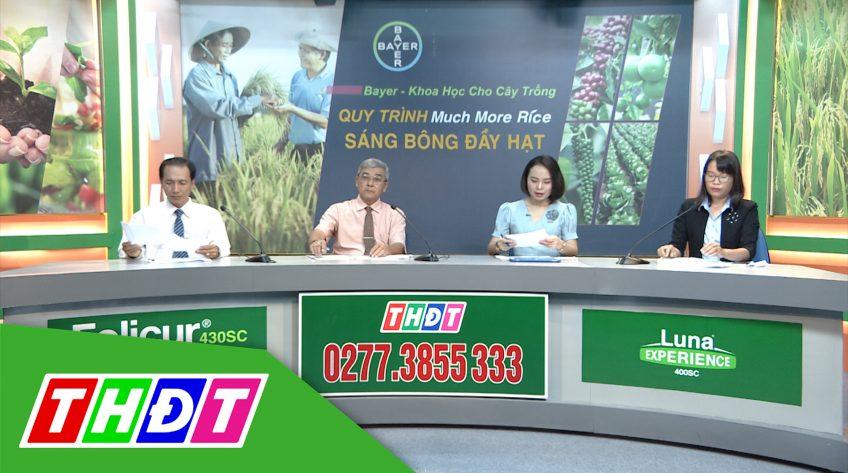 Khuyến nông - 28/9/2020 - Quản lý bệnh lem lép hạt Quy trình Much More Rice