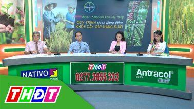 Tư vấn Khuyến nông - 23/11/2020 - Much more rice – Khỏe cây xây năng suất